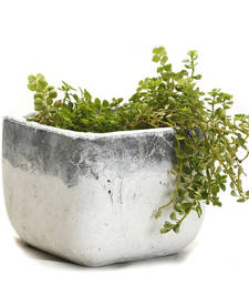 Buy Square Finish Mortar Design Finish Stone Planter Pot pot online