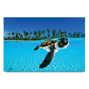 Sea Life Turtle Poster
