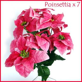 Poinsettia Bunch Pink - 7 flowers bunch