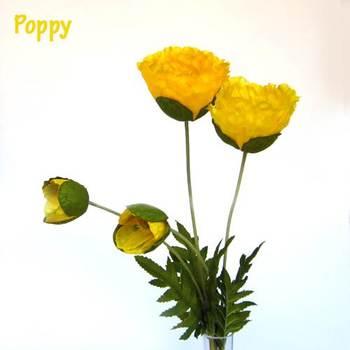 Yellow Poppy Blooms