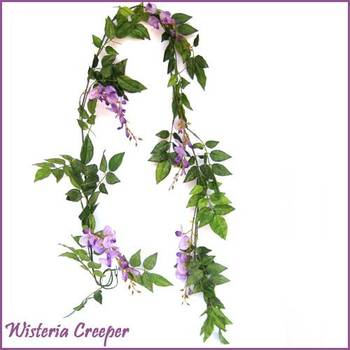 Wisteria creeper - 6 ft
