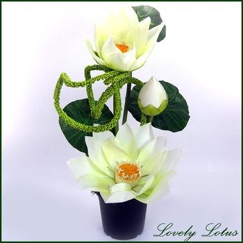 Lovely Lotus